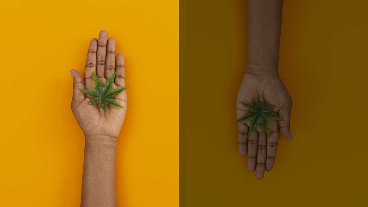 A Look Into The Ever-Thriving Cannabis Black Market