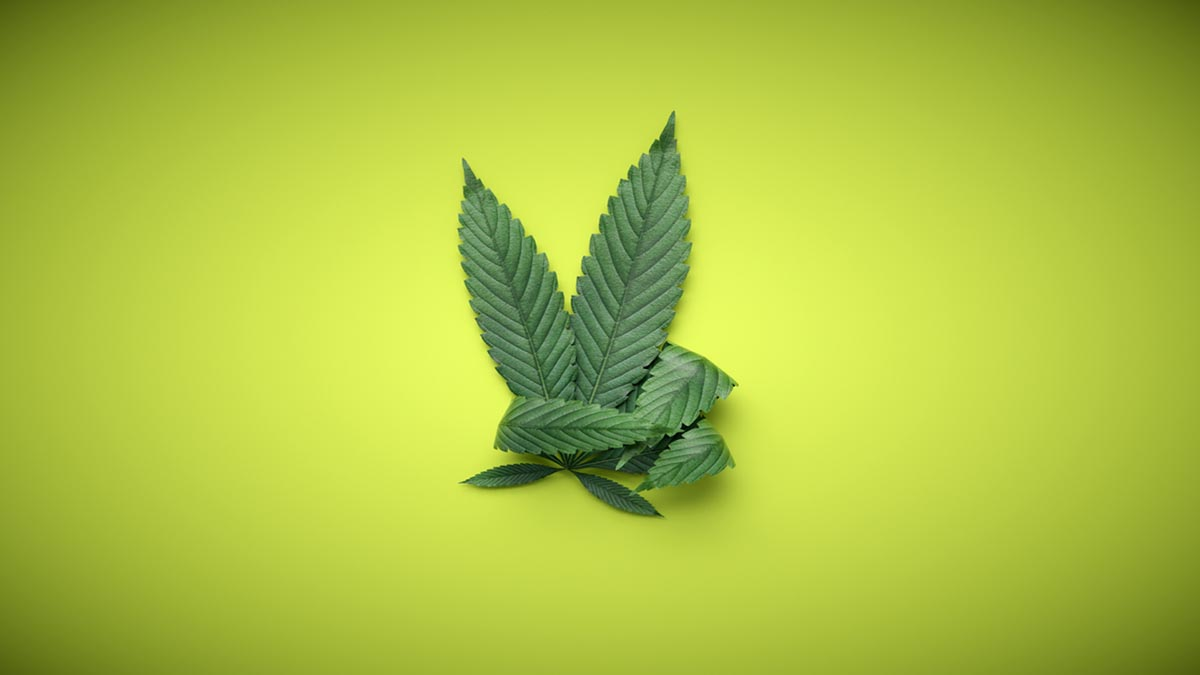 In Review: The Recent Cannabis News Cycle