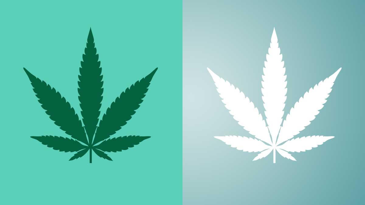 A Breakdown of Hemp Vs. Cannabis